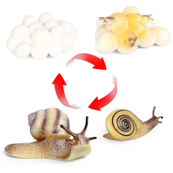 Life Cycle Teaching Toys Interesting Critters Snail Fly Worm