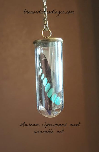 Real Butterfly Wing encased in a Sealed Glass Vial Artistically Made into Bronze Accented Pendant Necklace ( Cloche ) Compassionately Collected