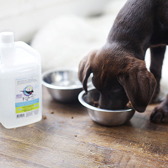 Introducing C8 KetoMCT oil for DOGS