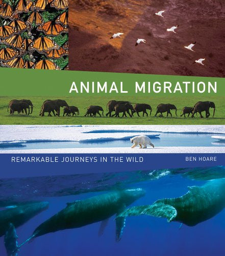 Animal Migration: Remarkable Journeys in the Wild [Hardcover] by Hoare, Ben