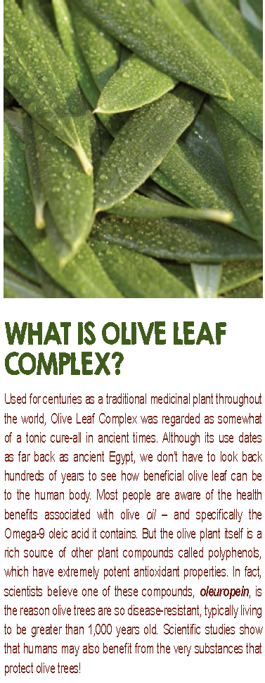 Olive Leaf Complex Natural Flavor 8oz