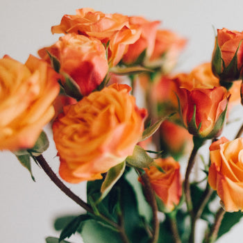 Byron - Twelve Long Stem Orange Roses Bouquet