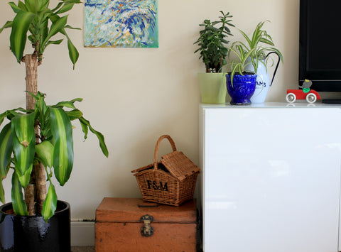 interior, home, furniture, the furniture recycling shop, glass, vintage,metal trunk, plants, wicker basket