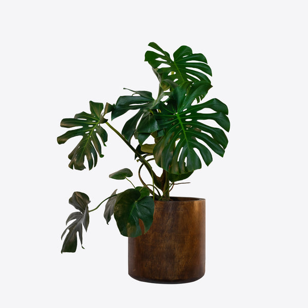 Arbor Collection Timber Indoor pot - Ian Lyell Design Pots for Living Life