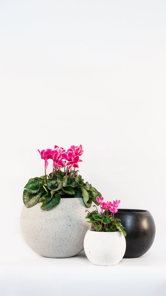 Cimstone Sphere - Ian Lyell Design Pots for Living Life