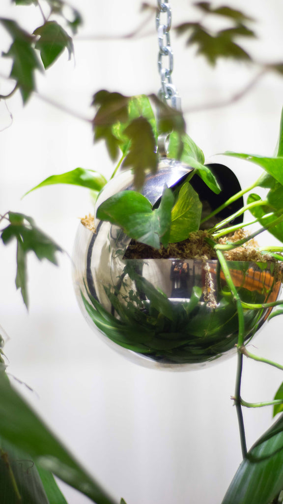 DAMA HANGING PLANTER_Sphere_316 Stainless Steel - Ian Lyell Design Pots for Living Life