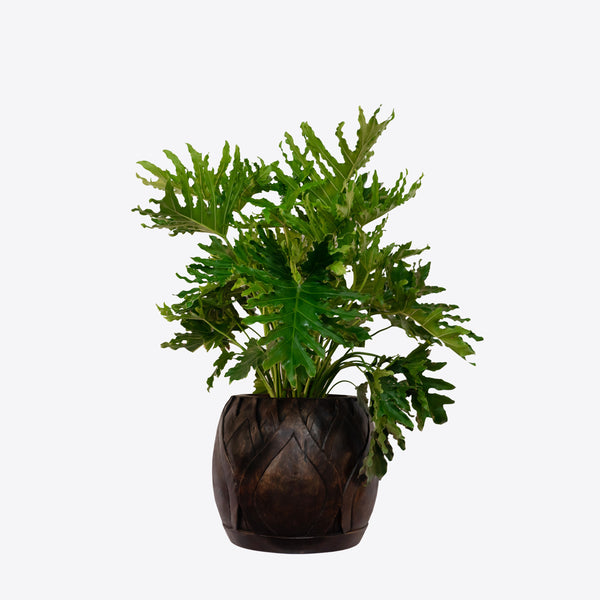 Arbor Collection Carved Wooden Indoor planter - Ian Lyell Design