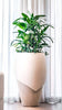 Millinery 7 Indoor Planter - Ian Lyell Design