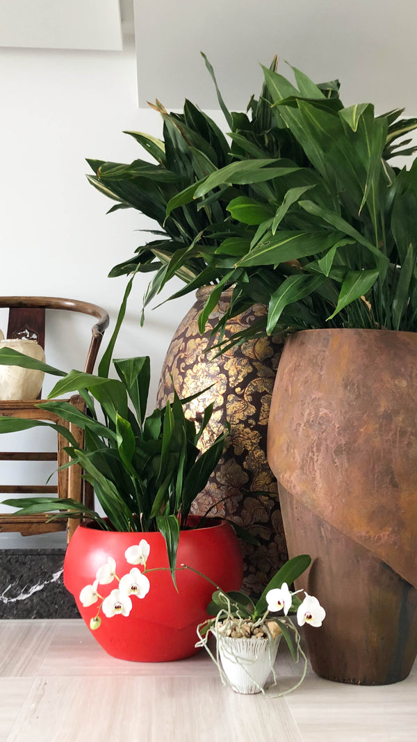 Millinery 9 Indoor Planter - Ian Lyell Design Pots for Living Life