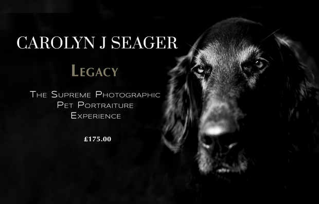LEGACY - PET PORTRAIT PHOTOSHOOT