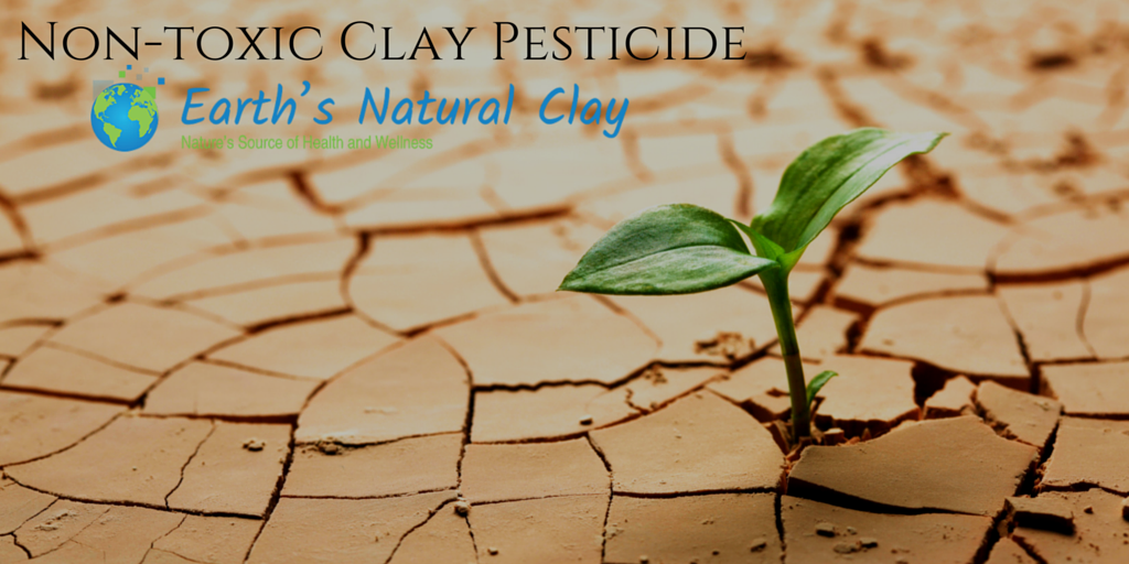 Try This 4,000 Year Old Non-Toxic Pesticide