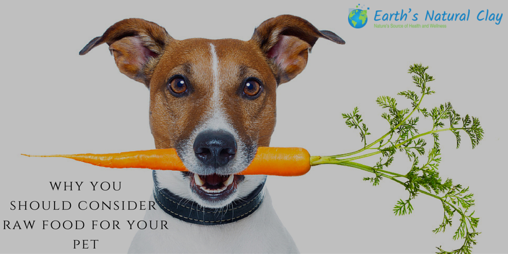 Why You Should Consider Raw Food For Your Pet