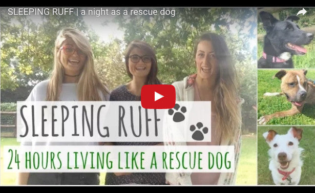 SLEEPING RUFF – 24 HOURS AS A RESCUE DOG
