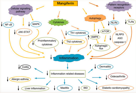 mangiferin effect on inflammation and related diseases