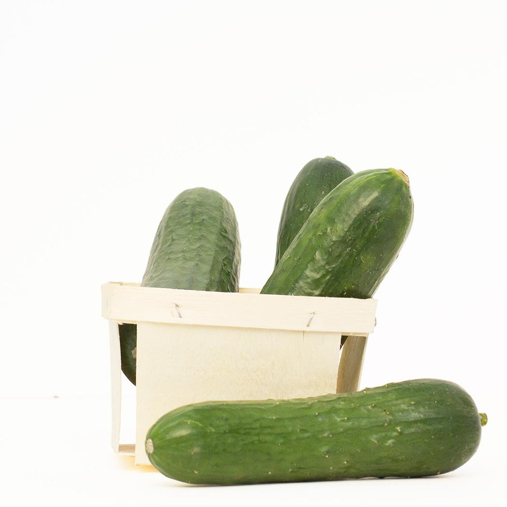 Organic Mini Cucumber - Pack of 6