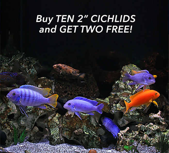 We Just Added Another Special Bundled Offer For May...2 FREE CICHLIDS!