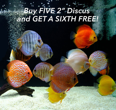 "2"" Discus Bundle Deal"