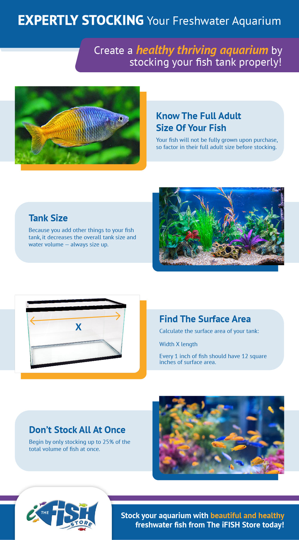 infographic about stocking a fish tank properly