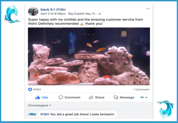 The iFISH Store Customer Testimonial