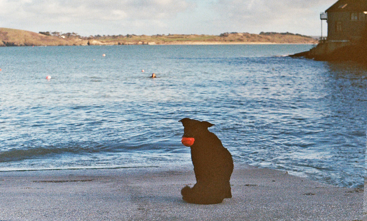 Nica waits patiently with her ball as Lottie swims in the cold Atlantic waters.