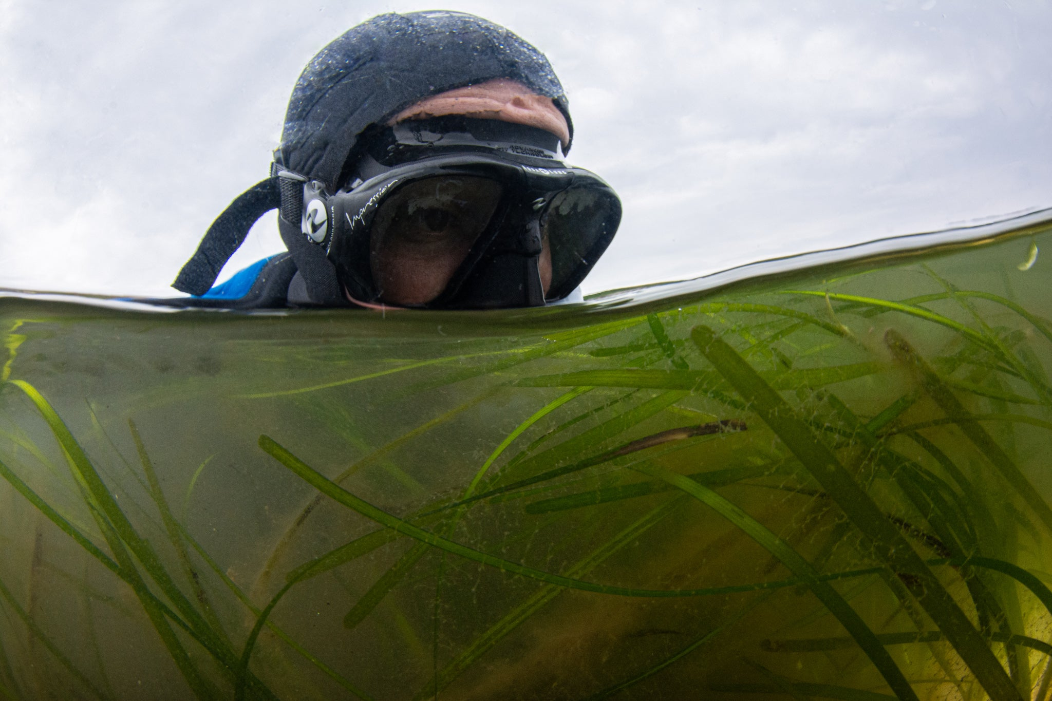 Diver with goggles above water and bottom half of image showing underwater seagrass