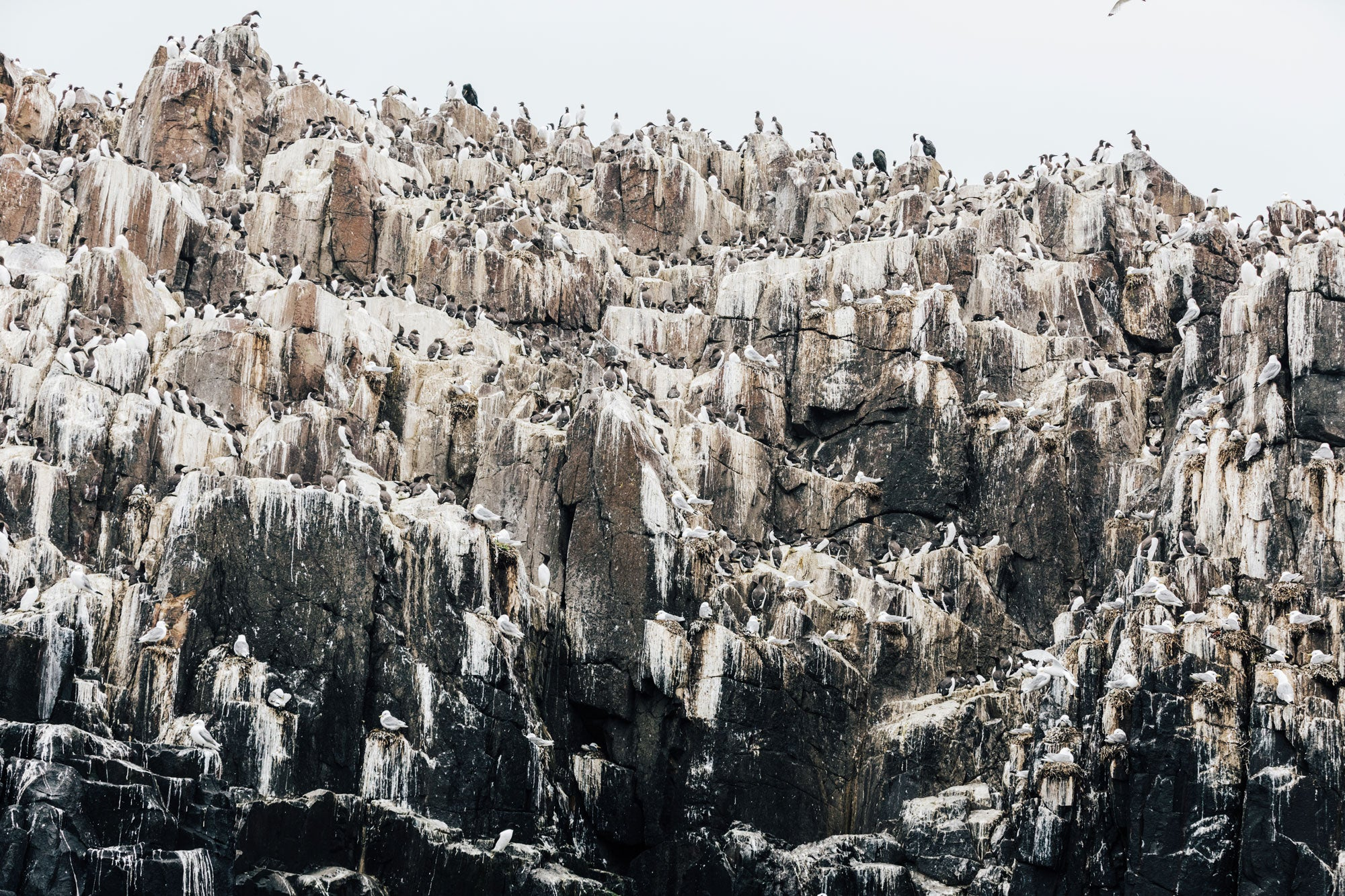 Cliffs-of-the-farne-islands-teeming-with-seabird-colonies
