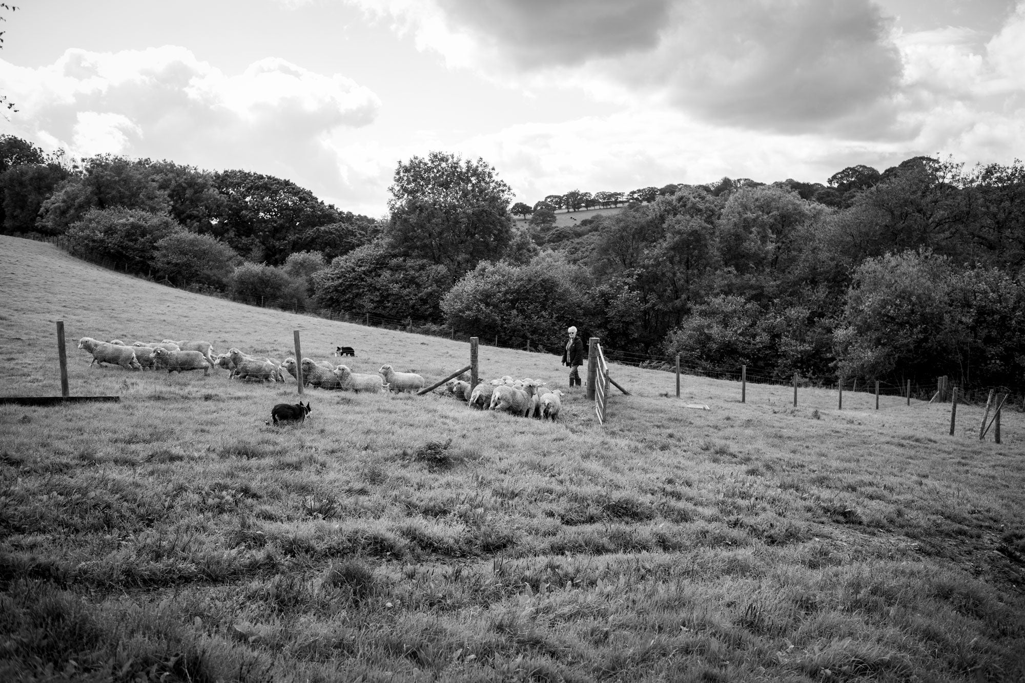 Finisterre-Bowmont-Project-Lesley-with-her-flock-in-the-field