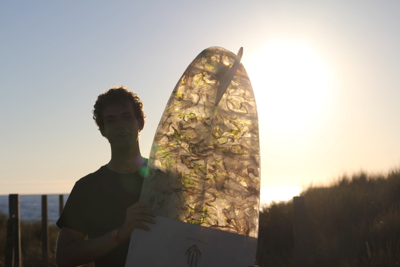 The sun shines through the translucent panels of the sea lettuce surfboard