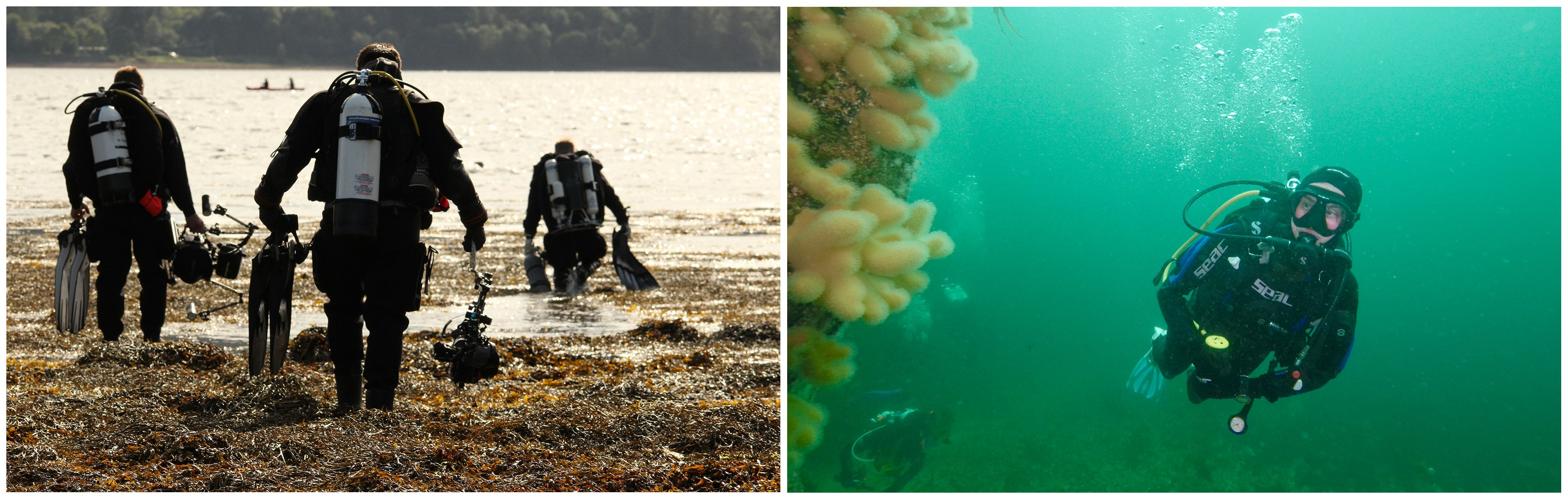 Left image of divers walking into the water, right image shows diver underwater with coral in the foreground