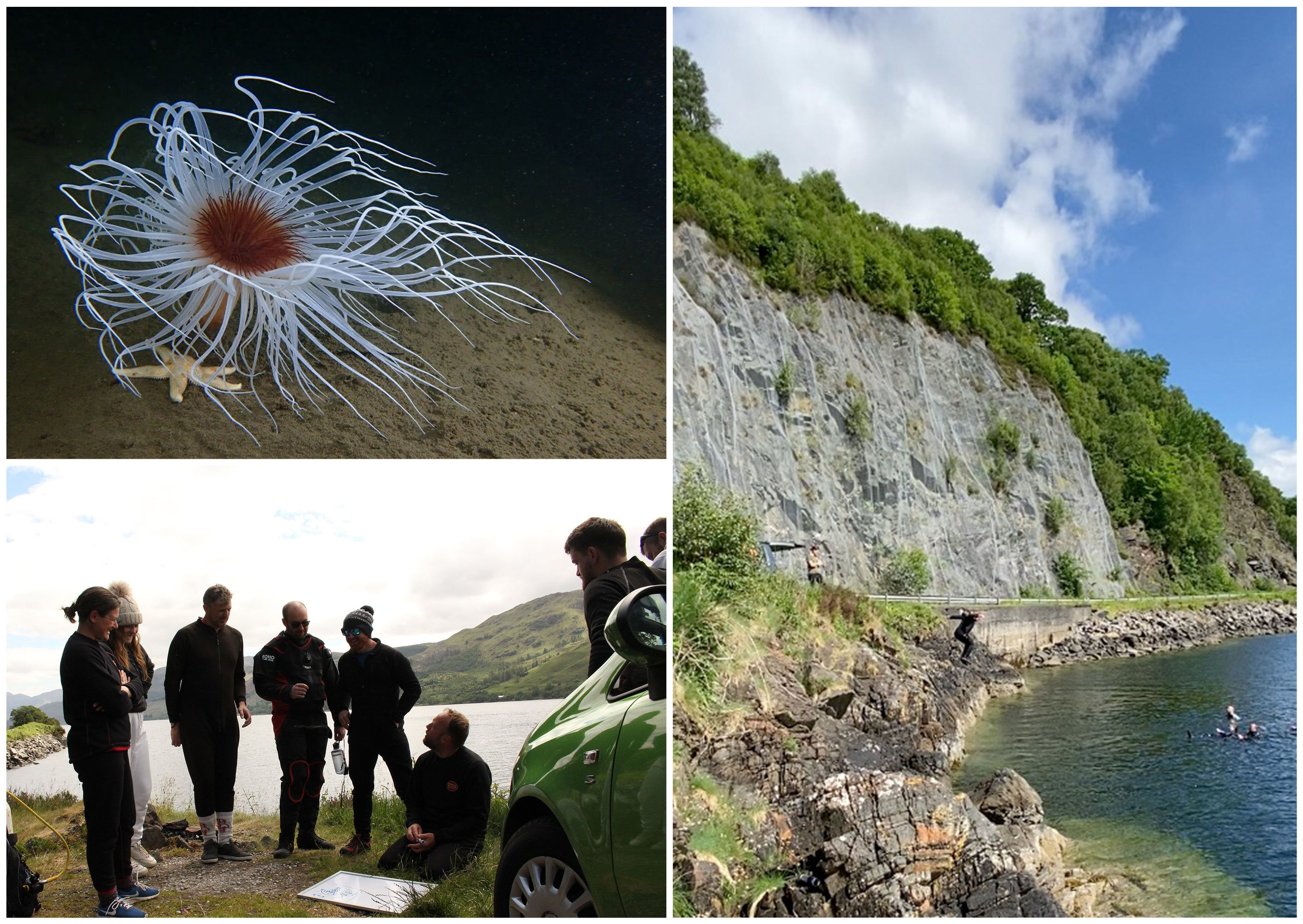 Top left image shows sea creature, bottom left shows divers preparing, right image shows person jumping into the loch