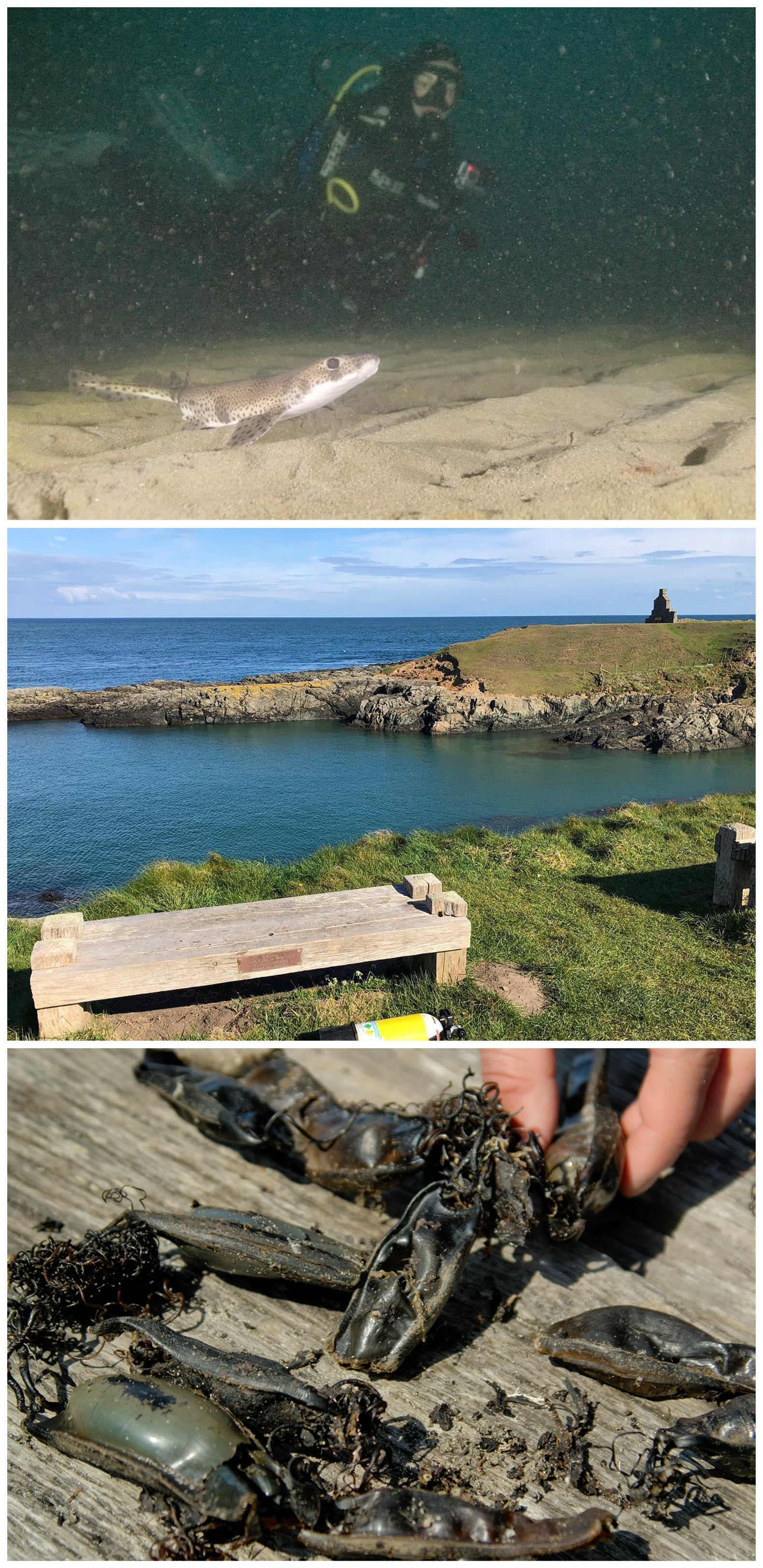 Top: Diver with catfish, Middle: Bench on coast at Porth Ysgaden, Bottom: Mermaid's Purses