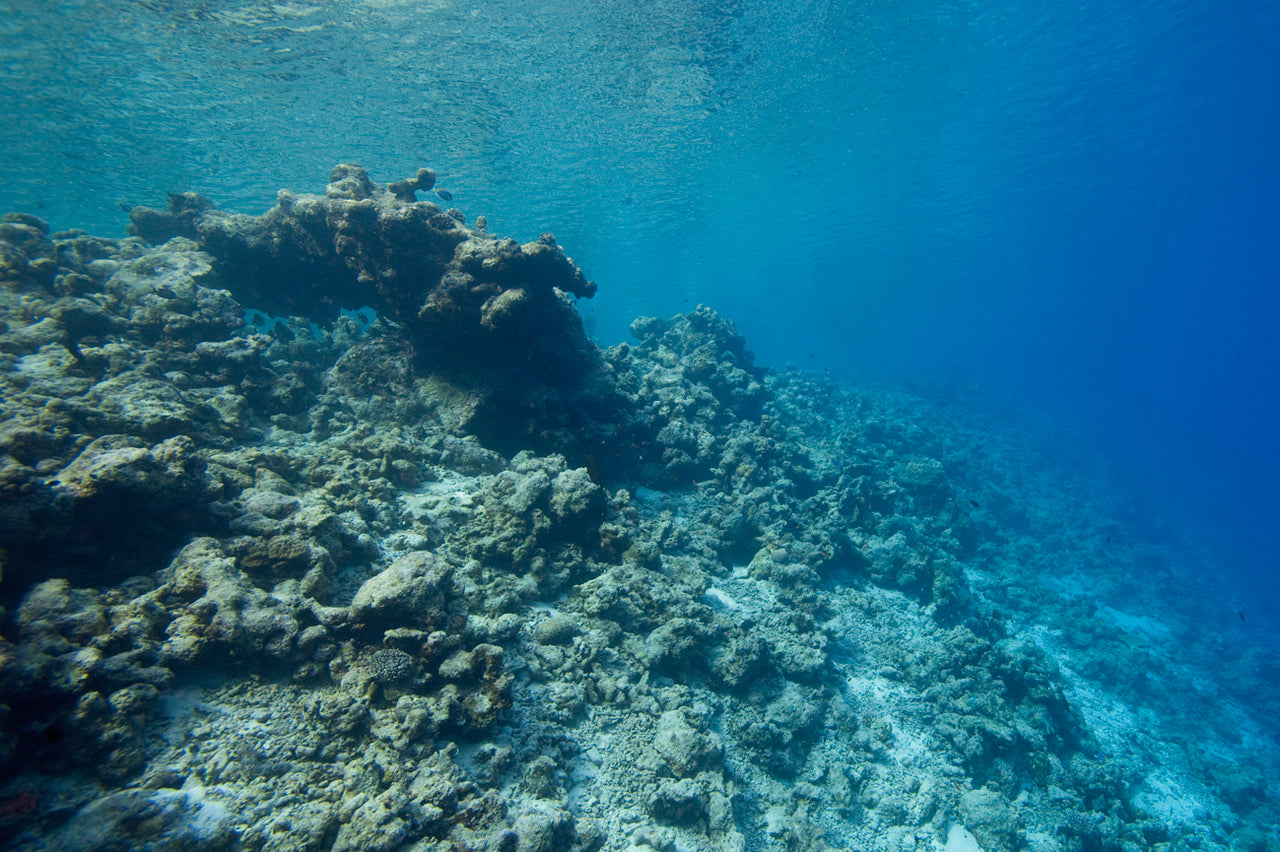 The devastation of a bleached coral reef