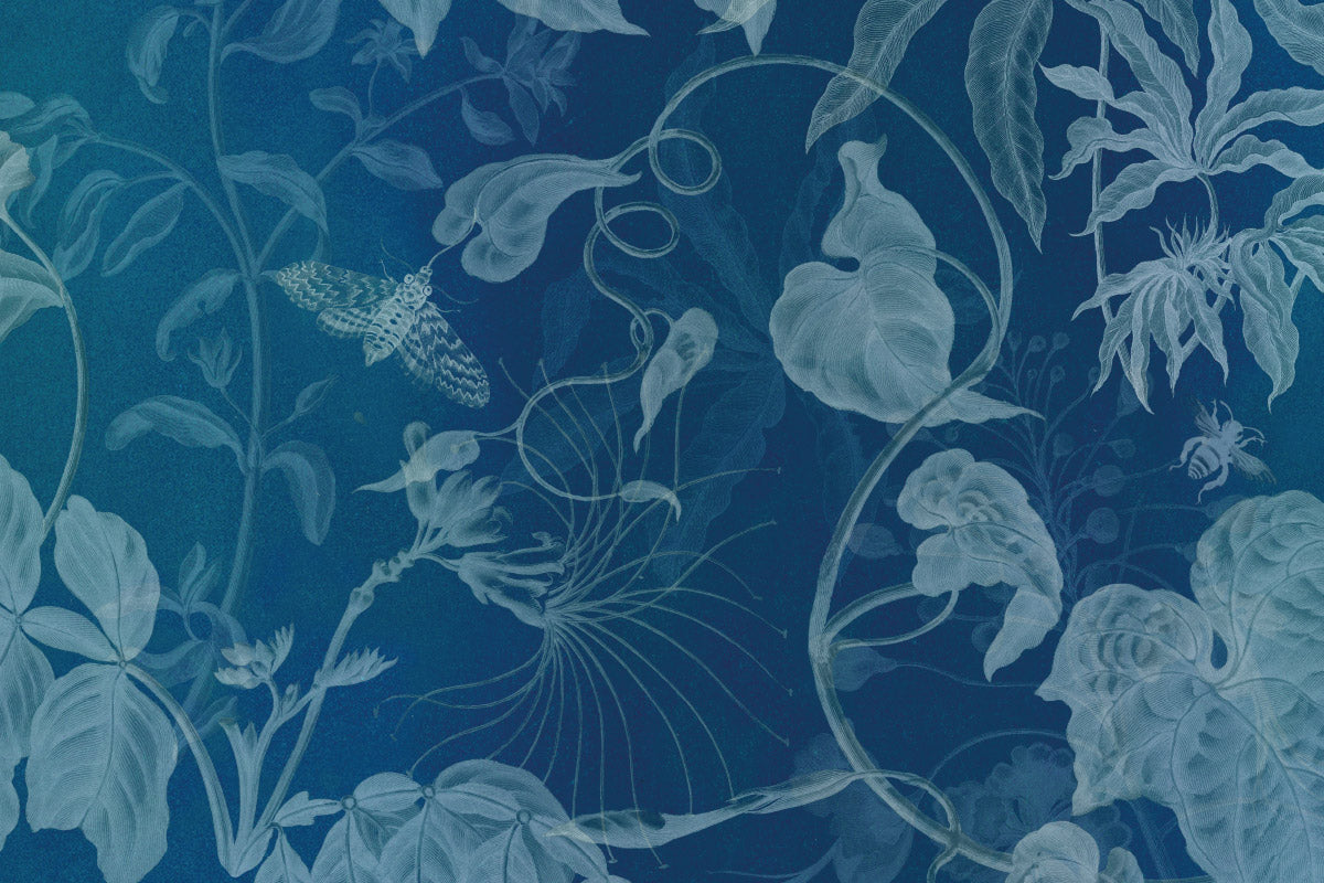 Our NHM + Finisterre print featuring the work of Maria Sibylla Merian