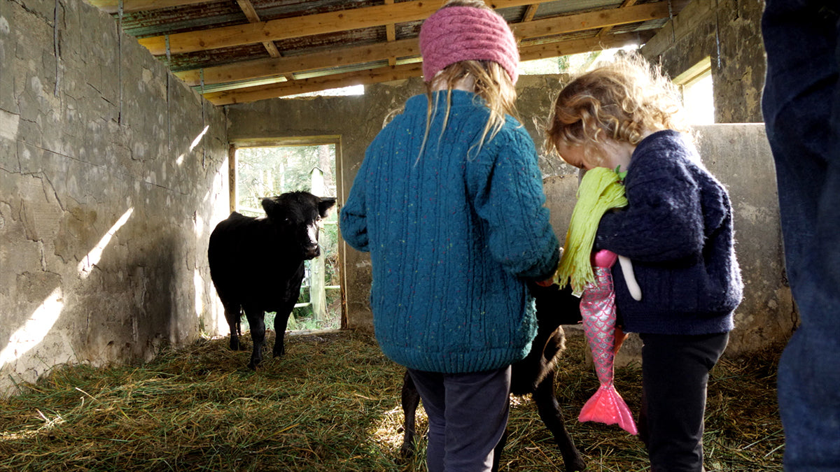 Young children feeding a cow on Moy Hill Farm