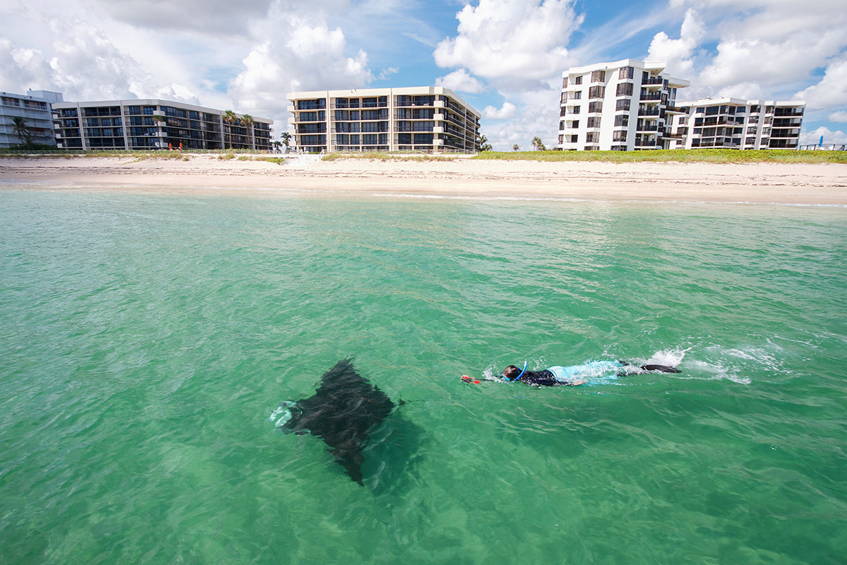 A swimmer follows a manta ray with luxury condos in the background
