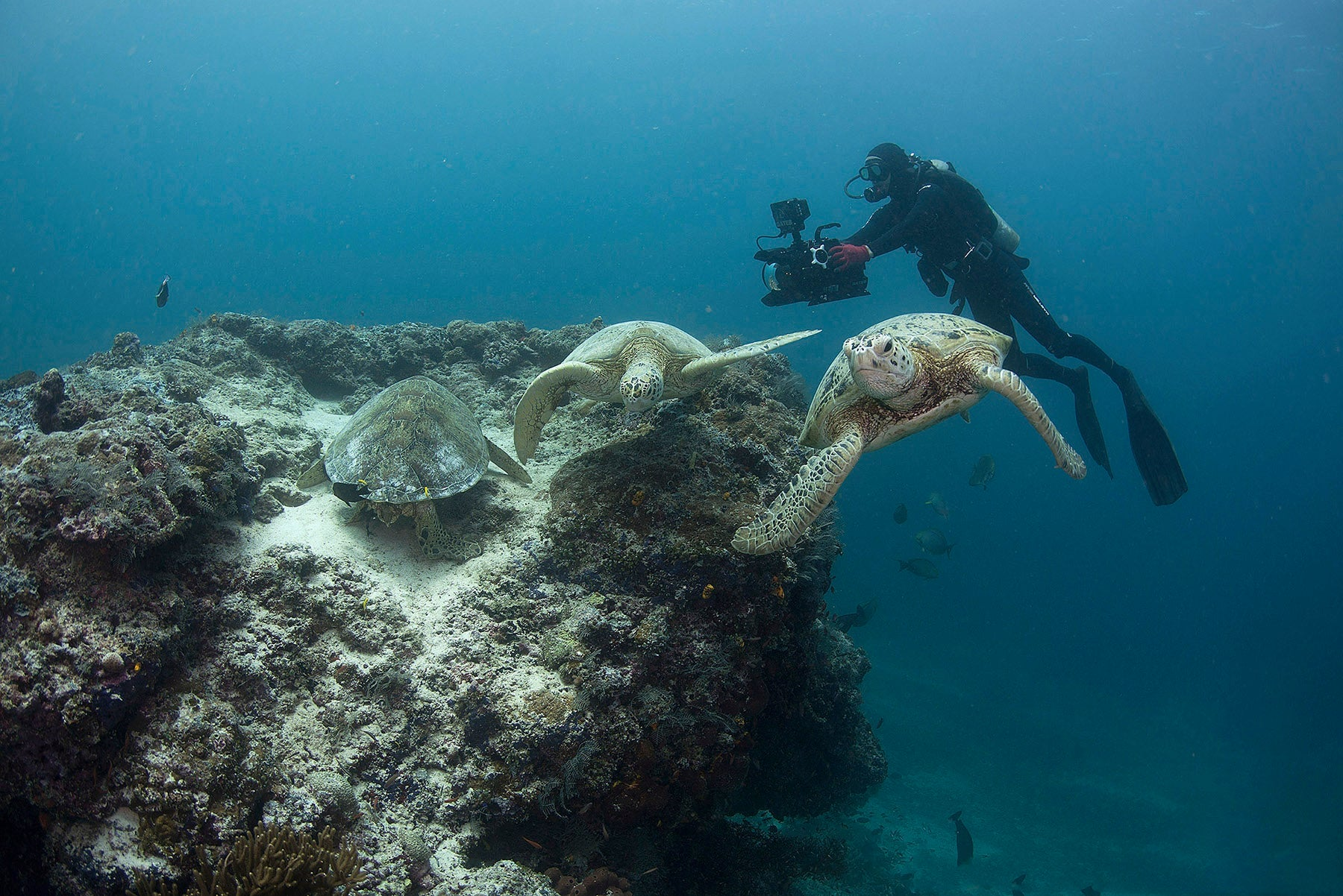 Roger Munns films turtles over a sea mound