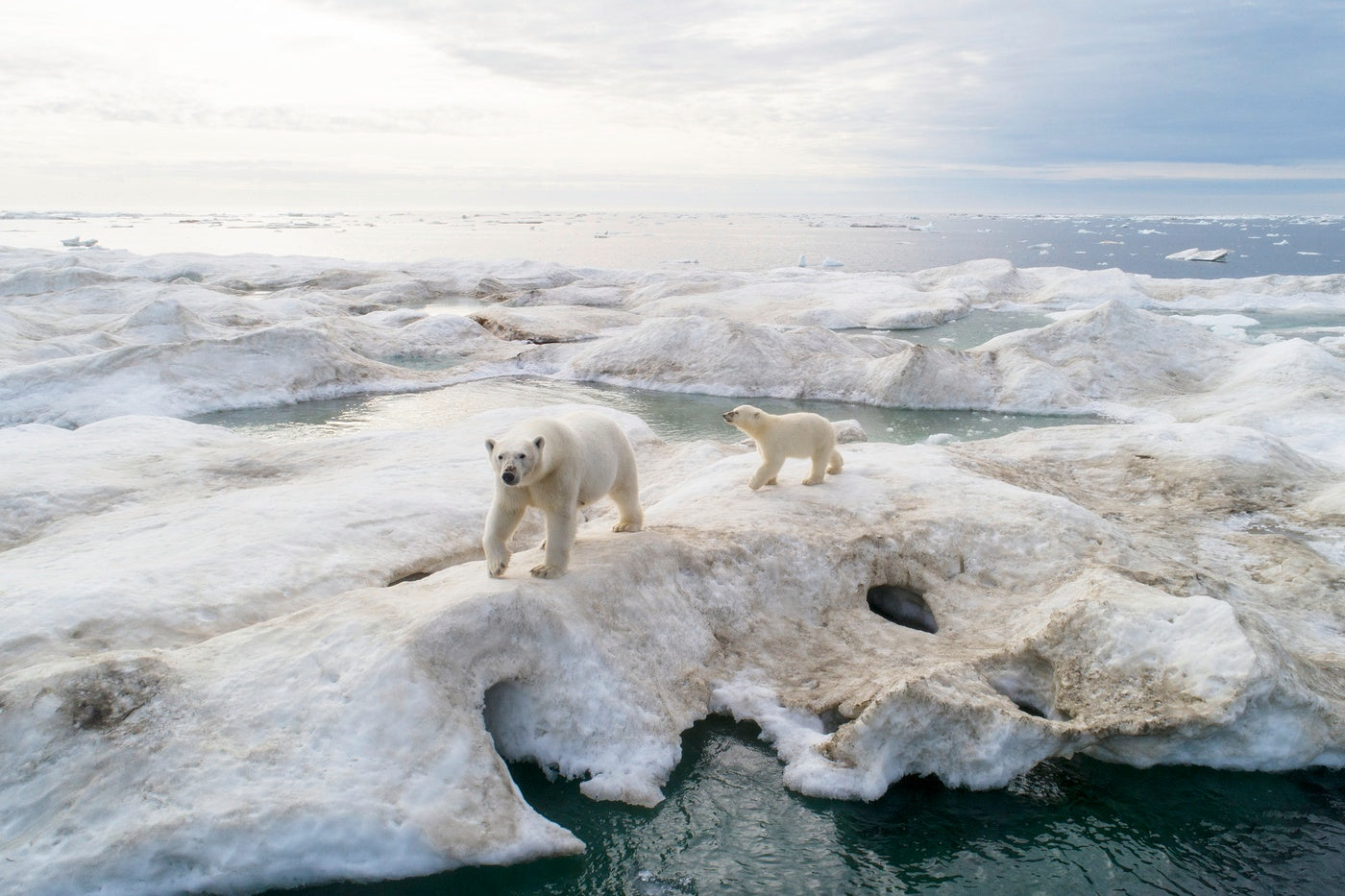 The Expedition Log with Lucia Griggi - Polar bear mother and her cub following the ships as they break through the ice