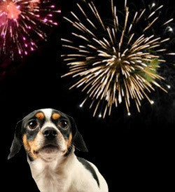 Fireworks: How to Keep Dogs Calm