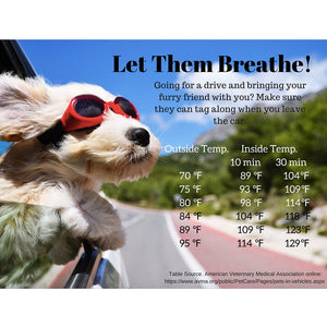 Summer Heat: Keep Those Puppies Cool!