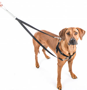Freedom No Pull Harness - Red & Black