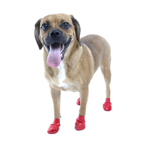 Pawz Reusable Rubber Dog Boots