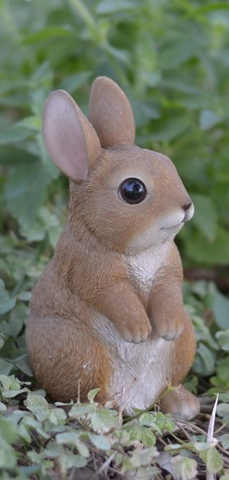 Small Rabbit Standing
