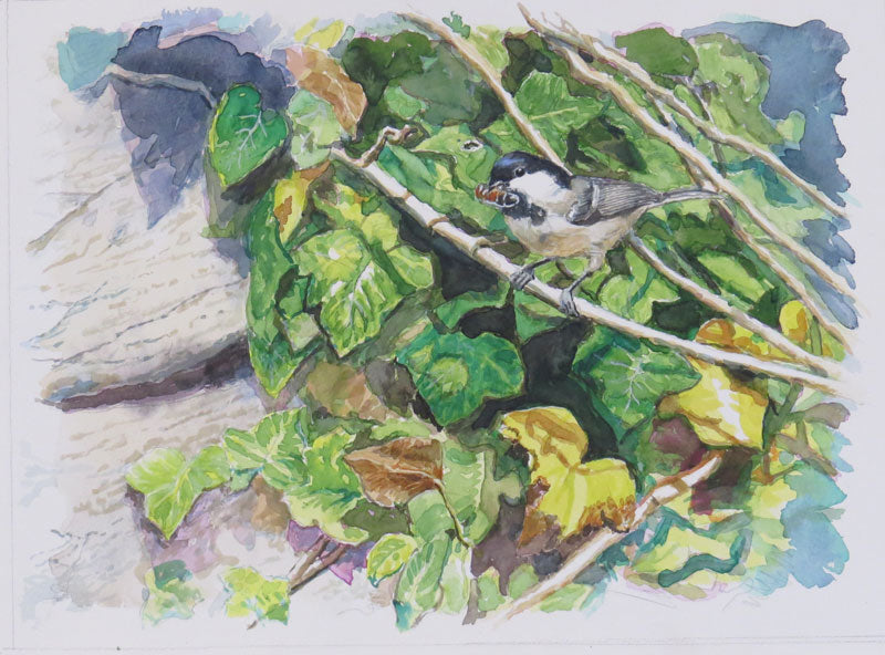 Feeding Time Coal Tit watercolour 40 x 30cm