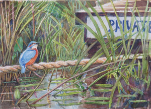 Private Moments Kingfisher watercolour 40 x 30cm