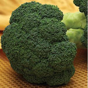 Broccoli Pack