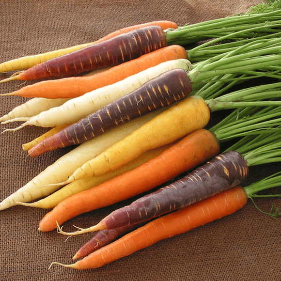 Patio Carrots Harlequin Mix