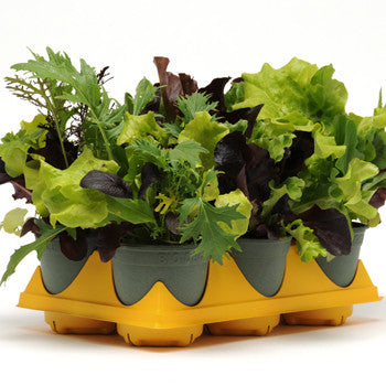 Mixed Lettuce Market Pack