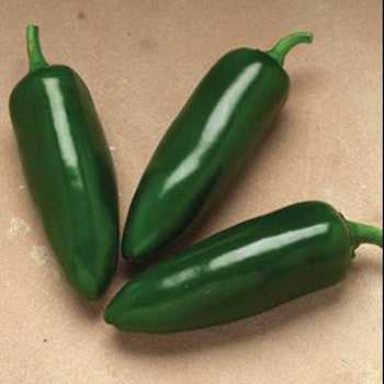 Pepper Jalapeno 6 Pack