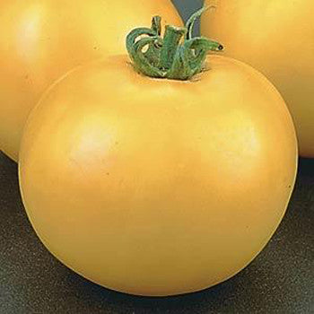 Tomato Lemon Boy 3.5 inch pot
