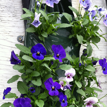Viola Bag of Bloom